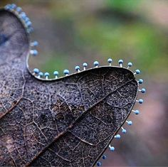 bealeiderman Last year's leaves get festive with tiny mushrooms/slimemold. image via voiceofnature They're beautiful! Fungi are extraterrestrial in origin, you know. Tiny Mushroom, Mushroom Art, Mushroom Fungi, Mushroom Ideas, Mushroom Pictures, Mushroom Hunting, Wild Mushrooms, Stuffed Mushrooms, Slime Mould