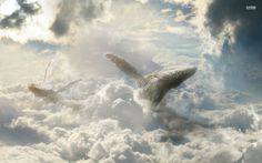 flying whale wallpaper - Google Search