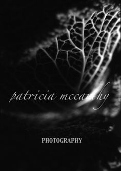 Cabbage veins.  #patriciamccarthyphotography.