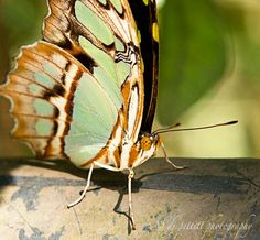 Butterfly World, Florida by  DJ Pettitt