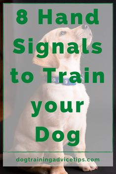 8 Hand Signals to Train your Dog - Dog Training Advice Tips Training Your Puppy, Dog Training Tips, Puppy Care, Pet Care, Cat Dog, No Rain, Dog Activities, Dog Care Tips, Dog Behavior