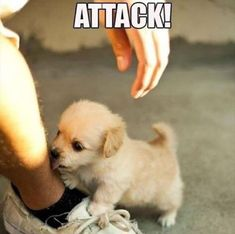 Baby Animals Funny Animal Pictures Of The Day - 25 Pics Funny Animal Jokes, Funny Dog Memes, Cute Funny Animals, Cute Cats, Adorable Baby Animals, Pet Memes, Baby Animals Pictures, Cute Animal Pictures, Funny Animal Pictures