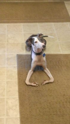 """""""Place the treat right between my legs and step away!"""""""