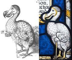 dodo-sidebyside.jpg