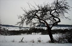 Der Schnee wird uns noch etwas erhalten bleiben. ...  Auch wenn`s in tiefen Lagen jetzt eher regnet. Und im Februar soll noch mehr Schnee kommen. Heißt für mich, (noch) mehr Vogelfutter kaufen. :-)