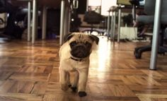 After Watching This Video, You'll Agree That Every Office Needs A Dog!