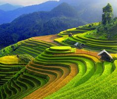 Northern Vietnam is the paradise of stunning and spectacular landscapes. So, you should know the best time to visit Northern Vietnam to enjoy their utmost beauty. Visit Vietnam, Vietnam Travel, Vietnam Tours, Sapa Vietnam, North Vietnam, Laos, Places To Travel, Places To See, Tourist Places
