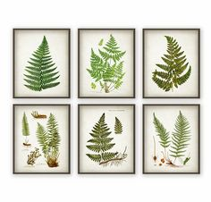 Fern Antique Botanical Print Set of 6 - Vintage Botanical Home Decor Antique Book Plate Illustration Giclee Picture Set of 6 Printed using high quality archival inks on heavy-weight archival paper with a smooth matte finish. A fantastic gift or a Shabby Chic Vintage, Vintage Home Decor, French Vintage, Vintage Style, Décor Antique, Antique Books, Vintage Botanical Prints, Botanical Art, Botanical Drawings