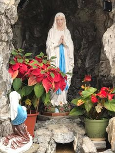 Our Lad of Lourdes ,pray for our sinners