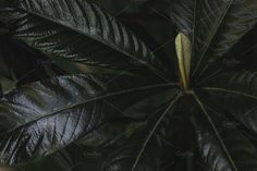 Low Key Leaves by René Jordaan Photography on @creativemarket #leaf#tropical#greenery#green#spring#inspiration#color#fresh