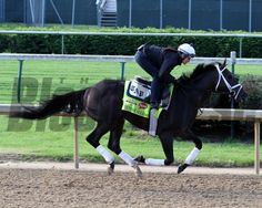 Intense Holiday on the track at Churchill Downs on May 1, 2014. Photo By: Chad B. Harmo
