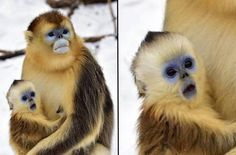 Baby Monkey Shocked At White Stuff Falling From Sky