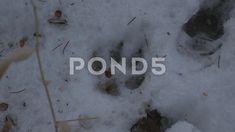 4k Coyote Paw Print In Snow Wild Animal Footprint Winter Wildlife - Stock Footage | by RyanJonesFilms