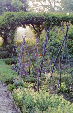 Love the border around garden, softens square plot and rustic bean poles...Rosemary? #potagergarden