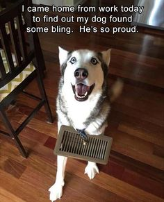 23 Funny Animal Pictures Of The Day. Dog finds himself some bling and, boy, is he oroud! Enjoy RUSHWORLD boards, BARK RUFFINGTON'S DOG KINGDOM, LULU'S FUNHOUSE and UNPREDICTABLE WOMEN HAUTE COUTURE. Follow RUSHWORLD! We're on the hunt for everything you'll love! #BarkRuffingtonsDogKingdom #FunnyDogs #CuteDogs