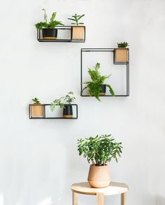 "700 Likes, 32 Comments - Umbra Ltd. (@umbra_ltd) on Instagram: ""We put our green thumbs to work this week and created this #minimalist succulent wall, with our…"""