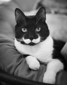 Formas curiosas en los pelos de los gatos