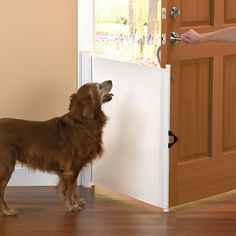 The Dog Escape Preventer - Hammacher Schlemmer - prevents pets from running out the door when you answer the door. I'm so glad that someone is thinking about things like this. If this works well, it could save so many doggie lives. Terra Nova, Hunter Douglas, Pomsky, Cool Gadgets, Mans Best Friend, Dog Treats, Dog Life, Pet Care, Tricks