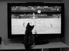 Un chat devant les jeux olympiques!  www.animaute.fr
