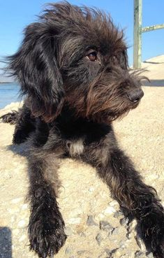 Pepper- she saved a woman's life who in turn flew back to Greece and saved hers.