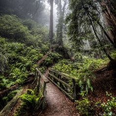 """the mossy path"" by Lorenzo Montezemolo (@elmofoto) at #500px  #photo #togs"