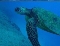 saipan northern mariana islands | Paraseiring Manyagaha - Picture of Saipan, Northern Mariana Islands