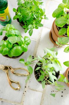 Indoor herb garden o