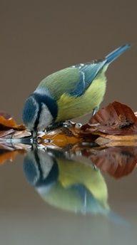 Beautiful Drinking bird Love Moments