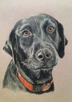 Custom Pet Portrait colored pencil-Dog drawing- Black lab drawing Dog painting Pet illustration-pencil drawing of your pet