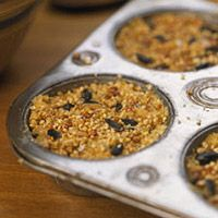 Suet Cakes: Make seedy suet cakes easily and economically. Just combine one part peanut butter, two parts birdseed, and five parts cornmeal to each part melted beef suet (available in the meat section of your grocery store). Press the mixture into muffin tins. Let harden. Drop a suet cake into a net bag and hang from a tree branch.