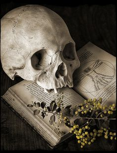 Skull and book…….MARION, THE LIBRARIAN GAVE THIS TO ME AS A BOOK MARKER……I ALWAYS SUSPECTED SHE DIDN'T LIKE ME (!!)…………ccp
