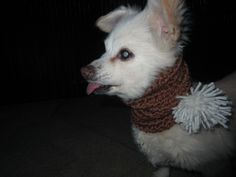 Adorable Dog Scarf with Pom Pom http://etsy.me/1QsBLpv via @Etsy #dogs #chihuahua #petscarf #dogscarf #petproducts #pup #Handmade #Crochet