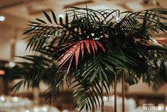 WedLuxe– Vintage Tropical | Photography by: Leydon Photography Follow @WedLuxe for more wedding inspiration! Las Vegas City, To Boot New York, Oil Painters, Tropical Plants, Stationery Design, Tablescapes, Greenery, Floral Design, Centerpieces