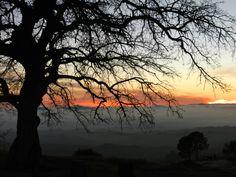 Tree overlooking sunset on Figueroa Mountain, CA