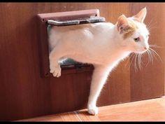 Как же мне попасть домой ! Что за шутки надо мной ! - #cat #cats #кот #кошка