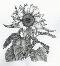 Trippy Sunflower Pencil Drawings | Sunflower on Behance