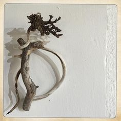 #kelp #driftwood #organic #form #studio #wall #today