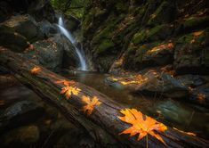 Sugar Loaf State Park, California, USA by Dan Wheeler  We just had our first real rain for a while. This was a good opportunity to go out and capture these waterfalls, the beautiful fall colors were welcome also