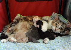 Love And Dedication Of A Stray Cat Mama - Love Meow