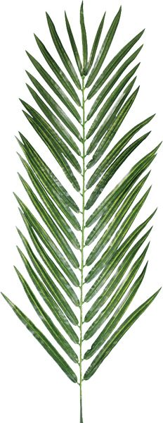Palm leaf.  £4.75 each