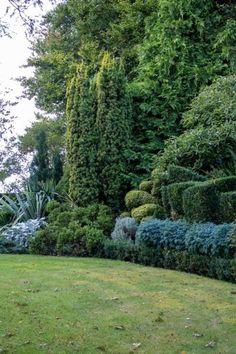 Create an evergreen garden border with shrubs and foliage contrast #middlesizedgarden