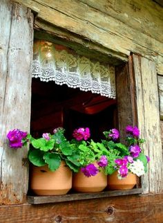 Windows lined with lace, distressed wood, & purple flowers.