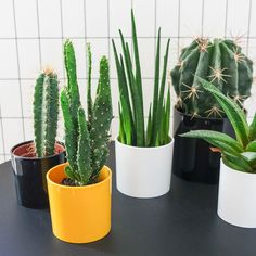 mini planters shared by Ushuaia.living #planter #mini #inspiration #plants #indoor #home #inspiration #style #ochre #green
