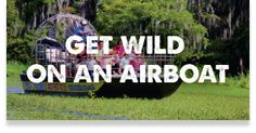 More than just an Airboat Tour. We've got Ranch Buggy Tours, a Wildlife Park, the Chomp House Grill, and more fun at Wild Florida! Wildlife Park, More Fun, Family Travel, Orlando, Florida, Tours, Adventure, Vacations, Ranch