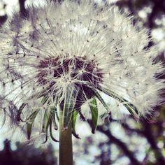 My garden  / Ann-Sofi Sweden