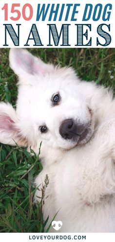 Trying to think of the best white dog name for your new white puppy? Here are over 150 dog names that are perfect for your white-coated canine companion. #LoveYourDog #WhiteDogBreeds #WhiteDogNames #CuteWhiteDogs #AllWhiteDogs #NamesForAllWhiteDogs #DogNames #TheBestDogNames Cute White Dogs, White Puppies, Dog Information, Female Names, R Dogs, Cool Names, Fun Activities, Your Dog, Husky