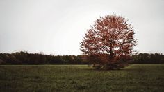 Autumn tree in the wind sky outdoors nature tree animated autumn country gif wind blown