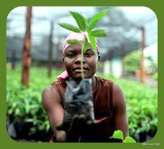 ManGod Haiti: Haiti Visuelle - To all you mango lovers