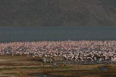 Kenya Lake System in the Great Rift Valley, Lake Bogoria