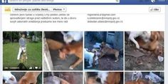 Justice for 2 stray dogs used as bait!!! | Click for details and please SIGN and share petition. Thanks.